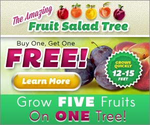 Buy One Get One FREE – Grow FIVE Fruits one ONE Tree