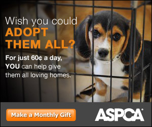ASPCA_0065_PersonalHook_WISH_B_300x250_02