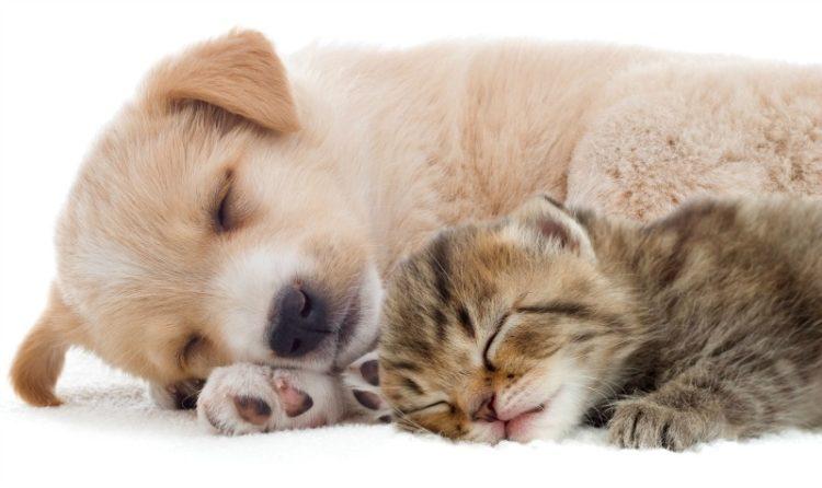sleeping-puppy-and-kitten