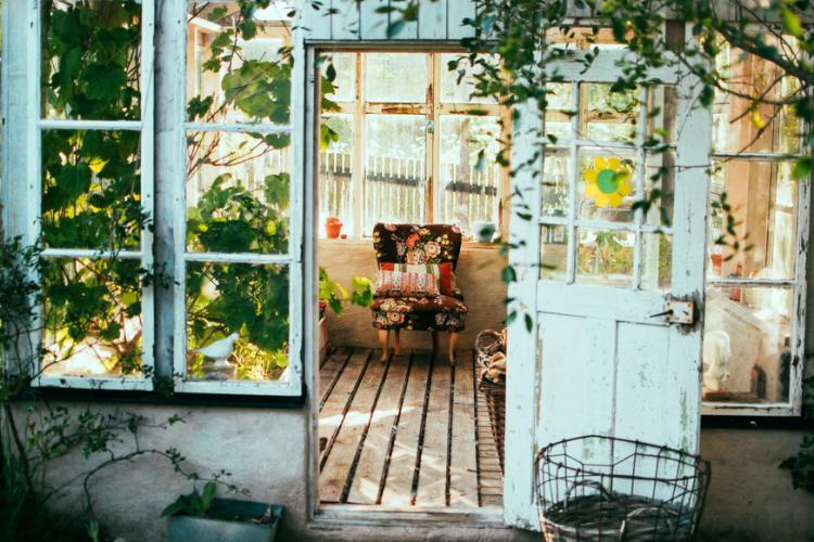 7 Houseplants that Help Create a Positive Environment